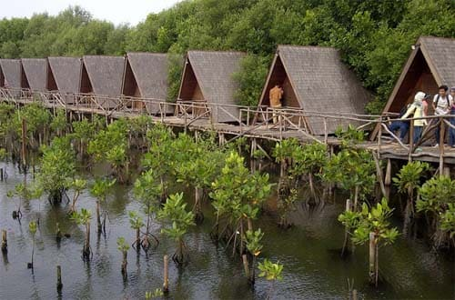 taman wisata alam mangrove angke kapuk